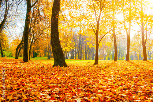 Fototapety pomarańczowe  fall-landscape-fall-city-park-orange-fallen-leaves-on-the-foreground-colourful-fall-october