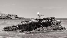Seabird On A Rock In Biarritz,...