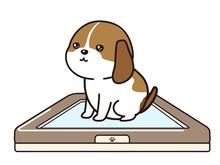 トイレで排泄する子犬