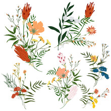 Hand Drawn Flower Collection. Various Flowers From Fields And Meadows In Bouquets. Big Set Botanic Branches, Leaves, Foliage, Herbs, Wild Plants. Bloom Vector Illustration Isolated On White Background