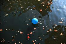 A Blue Balloon Fell Into The P...