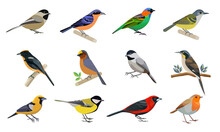 Vector Illustrations Include Images Of Various Birds.