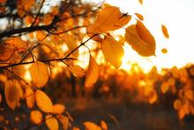 Autumn Foliage Nature With Bri...