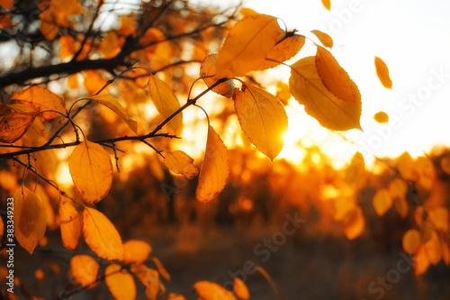 Photo Autumn foliage nature with bright rays at sunset
