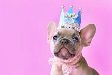 Face Of French Buldog Dog Pupp...