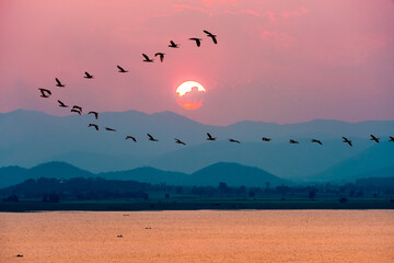 Panel Szklany Popularne Beautiful nature landscape birds flock flying in a row over lake water red sun on the colorful sky during sunset over the mountains for background at Krasiao Dam, Suphan Buri in Thailand