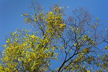 Autumn Trees Against A Clear B...
