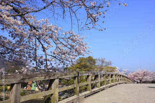 Fototapety, obrazy: 春の嵐山
