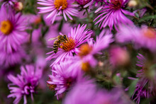 Purple Flowers And A Bee Resti...