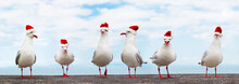 White Seagulls In Red Christmas Hats Funny Xmas Banner