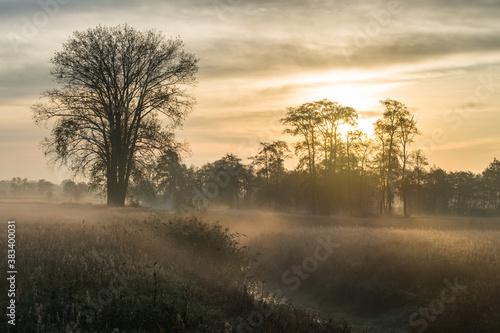 Fototapeta Jesienne drzewa we mgle obraz