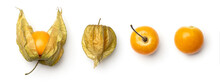 Collection Of Physalis Berries Isolated On White Background