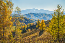 Autumn View. Yellow Trees On T...