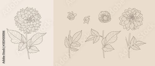 Foto Set Dahlia Flowers with Leaves in Trendy Minimal Liner Style