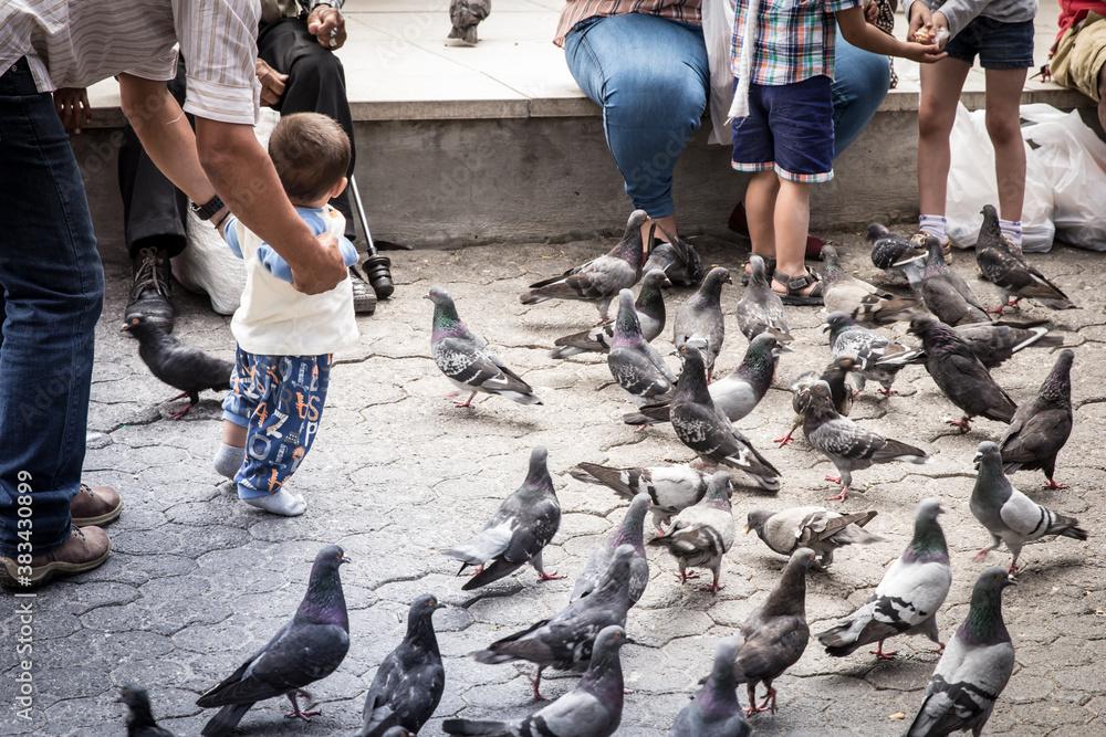 Fototapeta Pigeons in the city