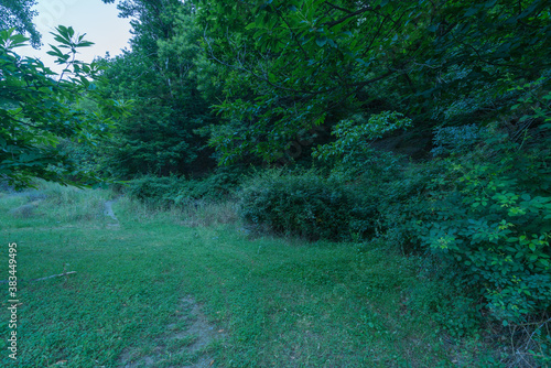 area of abundant vegetation in the countryside in southern Spain Wallpaper Mural