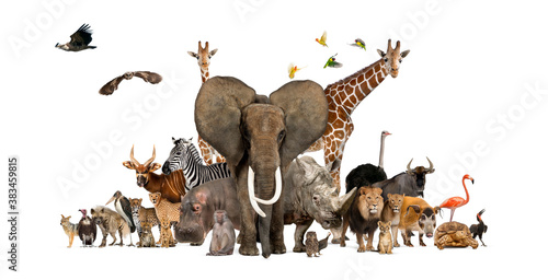 Large group of African fauna, safari wildlife animals together, in a row, isolated - fototapety na wymiar
