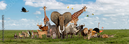 Fotografiet Large group of African fauna, safari wildlife animals together, in a row, isolat