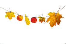 Red And Yellow Oak, Aspen And Maple Leaves Are Attached With A Clothespin To A Craft Rope. Isolated Objects On A White Background. Autumn Concept. Copy Space. High Quality Photo