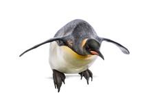 King Penguin Jumping For Divin...