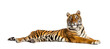 Leinwandbild Motiv Tiger lying down isolated on white