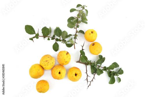 Photographie Chaenomeles fruits isolated on white background