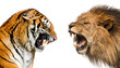 Side view of a lion and a tiger roaring ready to fight, isolated