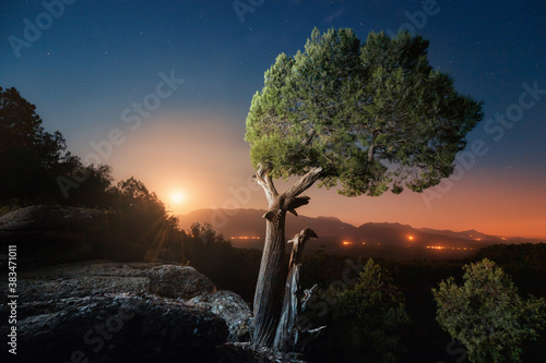 A lonely cypress tree on a moonlit night with rare stars in the sky Canvas Print