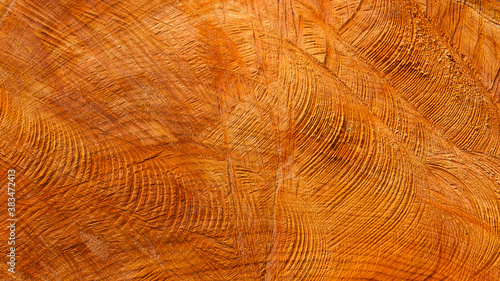 Fotografiet Section of a chopped trunk as background