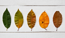 The Leaves Changing Colors Fro...