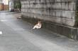 路地裏のネコ