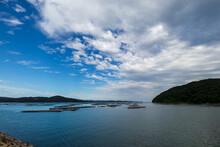 岡山県片上湾の牡蠣筏