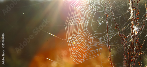 Photo Spider web on the grass with dew drops against the morning sun - selective focus