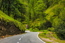 Road In The Forest And Hills