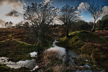 Moorland, Flooded With Trees In Cornwall