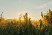 Sunset Over Shrubs Near Mono L...
