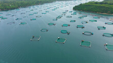 Fish Farm With Cages For Fish ...
