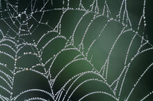 Dew Covered Spiders Web