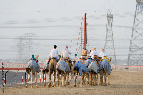 Fototapeta Dubai UAE Camels and jockeys training at Nad Al Sheba Camel Racetrack at sunset