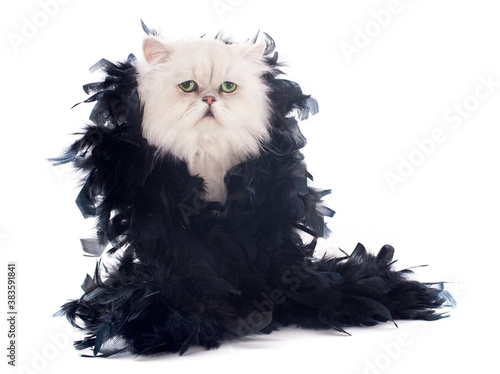 white persian cat and boa Fototapeta