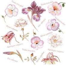 Hand Drawn Garden Flower Set