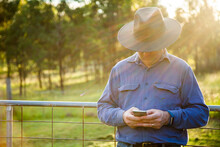 Man Leaning On Farm Gate Using Smartphone In Afternoon Light