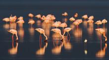 Flamingo On Sunset.