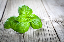 Basil Leaves On A Wooden Table