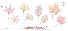 Illustration Of Various Fallen Leaves In Pen Drawing Style