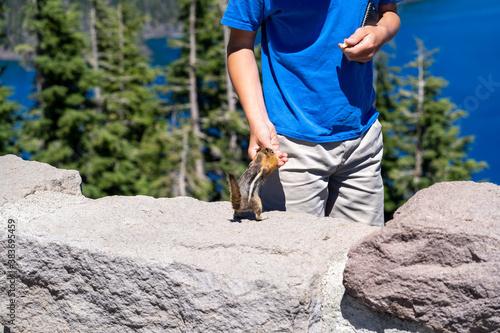 Child visiting Crater Lake National Park feeds a squirrel, in Oregon Billede på lærred