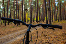Cycling Through Natural Landscapes. Ride A Bike In A Pine Forest. View From Behind The Handlebars Of The Bike To The Road.