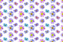 Floral Seamless Pattern From Flowers Of Alpine Aster. White Isolated Background. Close-up. Macro Shooting. Concept For Printing And Design.