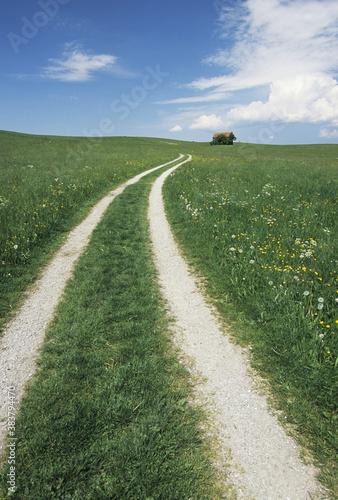 Canvas 草原の道