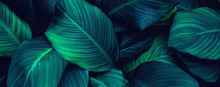 Abstract Green Leaf Background...